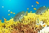 Fototapety ZWIERZĘTA życie pod wodą 4326 mini