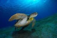 Fototapety ZWIERZĘTA życie pod wodą 4327 mini