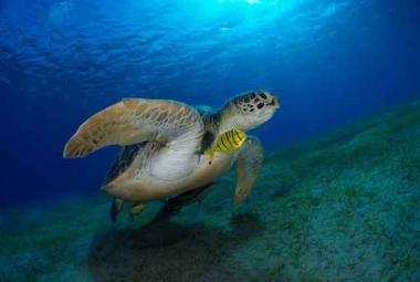 Fototapety ZWIERZĘTA życie pod wodą 4327