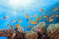 Fototapety ZWIERZĘTA życie pod wodą 4328 mini