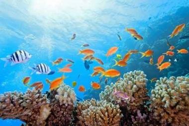 Fototapety ZWIERZĘTA życie pod wodą 4328
