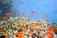 Fototapety ZWIERZĘTA życie pod wodą 4330 mini