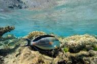 Fototapety ZWIERZĘTA życie pod wodą 4331 mini