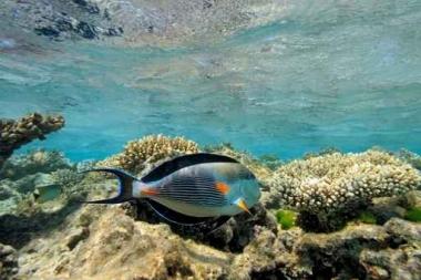 Fototapety ZWIERZĘTA życie pod wodą 4331