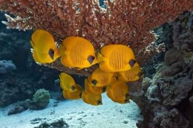 Fototapety ZWIERZĘTA życie pod wodą 4332
