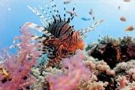 Fototapety ZWIERZĘTA życie pod wodą 4333 mini