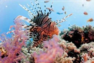 Fototapety ZWIERZĘTA życie pod wodą 4333