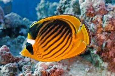 Fototapety ZWIERZĘTA życie pod wodą 4334