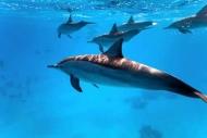 Fototapety ZWIERZĘTA życie pod wodą 4335 mini