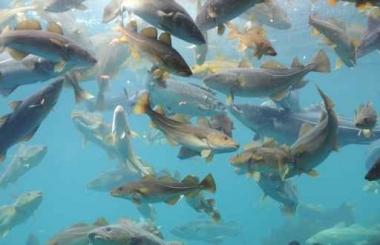 Fototapety ZWIERZĘTA życie pod wodą 4337