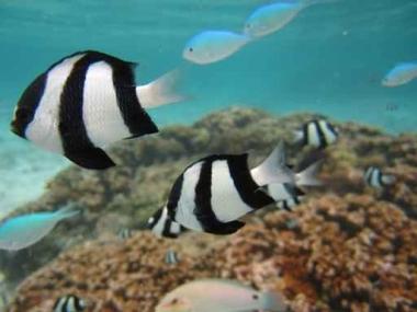 Fototapety ZWIERZĘTA życie pod wodą 4338