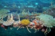 Fototapety ZWIERZĘTA życie pod wodą 4339 mini