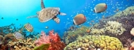 Fototapety ZWIERZĘTA życie pod wodą 4340 mini
