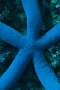 Fototapety ZWIERZĘTA życie pod wodą 4341 mini