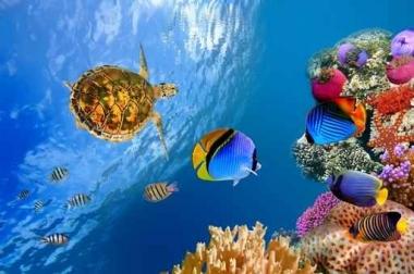 Fototapety ZWIERZĘTA życie pod wodą 4342