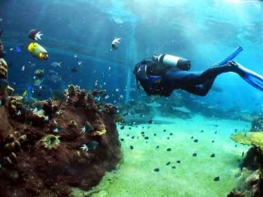 Fototapety SPORT pływanie 5156