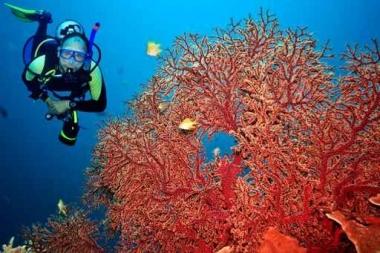 Fototapety SPORT pływanie 5171
