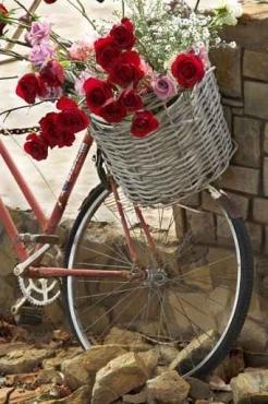 Fototapety ULICZKI rowery 5236