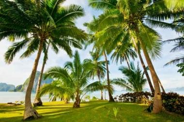 Fototapety PEJZAŻ WODNY palmy 5368