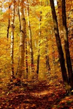 Fototapety PEJZAŻ jesień 5533