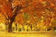 Fototapety PEJZAŻ jesień 5534 mini