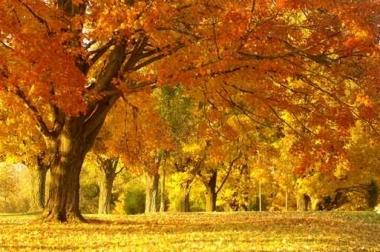 Fototapety PEJZAŻ jesień 5534