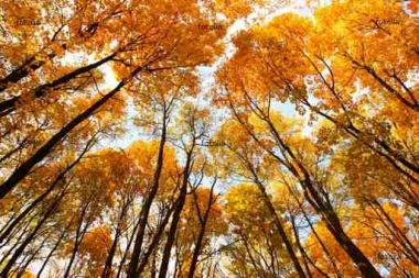 Fototapety PEJZAŻ jesień 5535