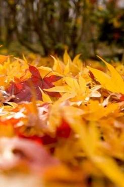 Fototapety PEJZAŻ jesień 5536
