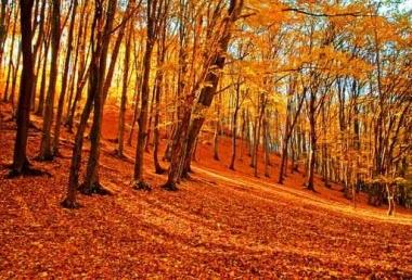 Fototapety PEJZAŻ jesień 5537