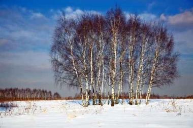 Fototapety PEJZAŻ zima 5593