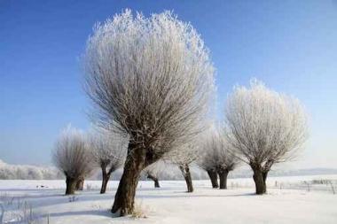 Fototapety PEJZAŻ zima 5597