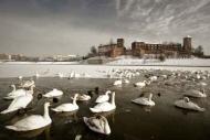 Fototapety PEJZAŻ zima 5598 mini