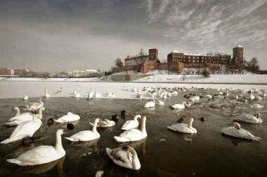 Fototapety PEJZAŻ zima 5598