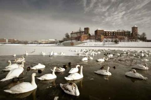 Fototapety PEJZAŻ zima 5598-big