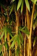 Fototapety NATURA bambusy 6537 mini