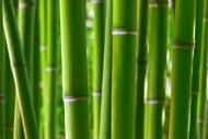 Fototapety NATURA bambusy 6539 mini