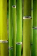 Fototapety NATURA bambusy 6541 mini