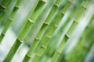 Fototapety NATURA bambusy 6542 mini
