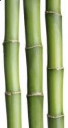 Fototapety NATURA bambusy 6544 mini