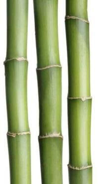 Fototapety NATURA bambusy 6544
