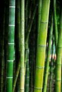 Fototapety NATURA bambusy 6545 mini