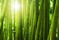 Fototapety NATURA bambusy 6546 mini