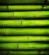 Fototapety NATURA bambusy 6547 mini