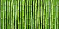 Fototapety NATURA bambusy 6550 mini