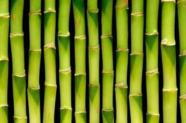 Fototapety NATURA bambusy 6552