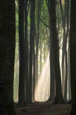 Fototapety NATURA drzewa 6554