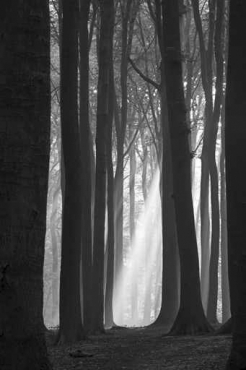 Fototapety NATURA drzewa 6555
