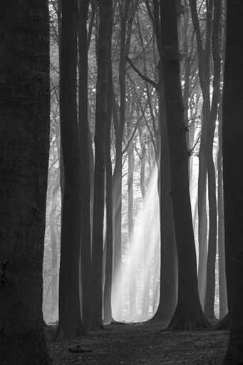 Fototapety NATURA drzewa 6555-big