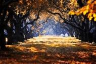 Fototapety NATURA drzewa 6556 mini