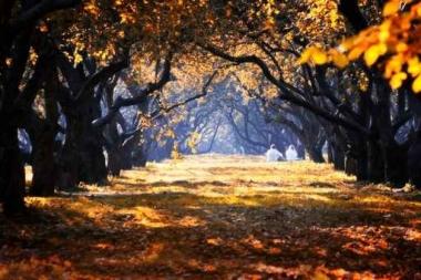 Fototapety NATURA drzewa 6556